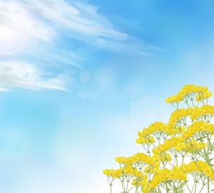 オミナエシと秋空のイラスト素材 [FYI04540918]