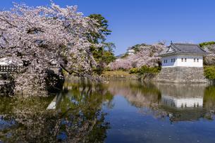 小田原城址公園の満開の桜の写真素材 [FYI04540994]