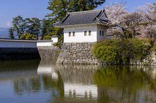 小田原城址公園の満開の桜の写真素材 [FYI04540995]