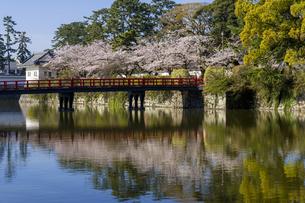 小田原城址公園の満開の桜の写真素材 [FYI04541007]