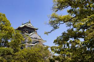 緑に包まれる大阪城の写真素材 [FYI04541250]