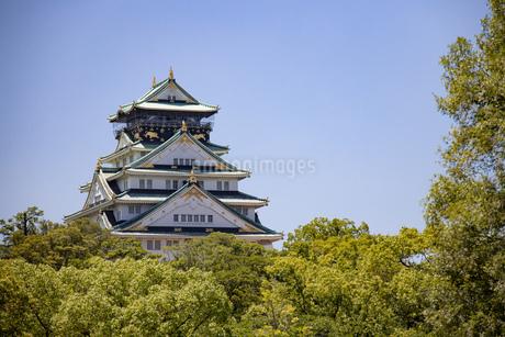 晴天の大阪城北側の写真素材 [FYI04541266]