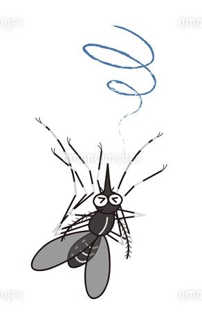 蚊 ヒトスジマジカ イラストのイラスト素材 [FYI04541453]