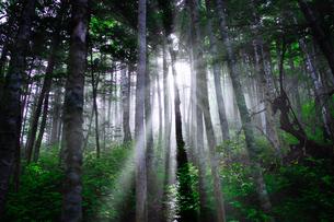 朝の森の写真素材 [FYI04542236]