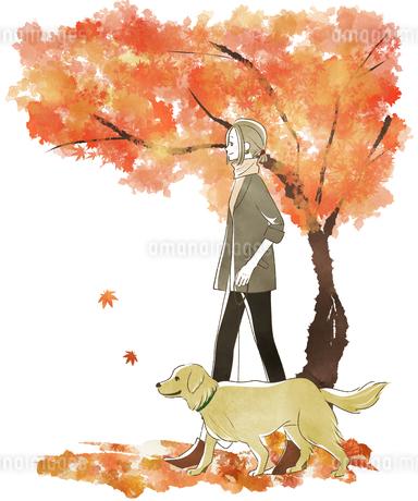 犬の散歩をする女性-秋・紅葉のイラスト素材 [FYI04542659]