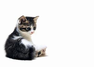 お座りする子猫の写真素材 [FYI04542718]