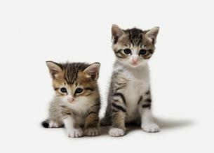2匹の子猫の写真素材 [FYI04542720]