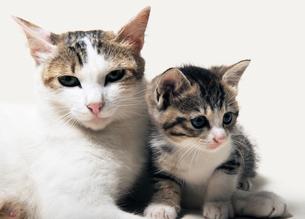 親猫と子猫の写真素材 [FYI04542722]
