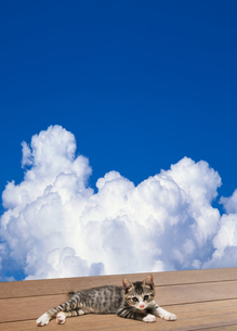 入道雲と寝転ぶ子猫の写真素材 [FYI04542725]