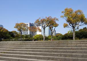 幕張海浜公園の石段と赤い葉の木立の写真素材 [FYI04542768]