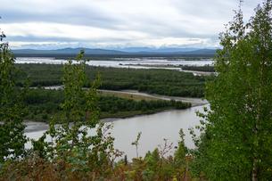 アラスカの森、夏の湿地帯と雪山の写真素材 [FYI04542914]