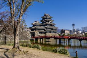 信州・春の松本城の写真素材 [FYI04542981]