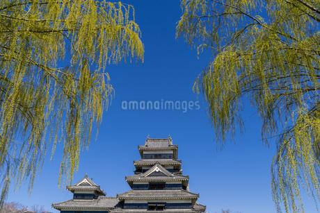 信州・春の松本城の写真素材 [FYI04542984]