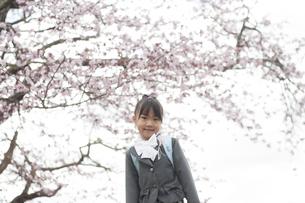 桜の前で微笑む小学生の写真素材 [FYI04545020]