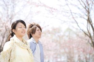 桜の前で深呼吸をするカップルの写真素材 [FYI04545117]