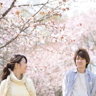 桜の前で微笑むカップルの写真素材 [FYI04545131]