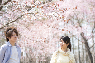 桜の前で微笑むカップルの写真素材 [FYI04545132]
