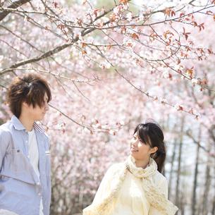 桜の前で微笑むカップルの写真素材 [FYI04545134]