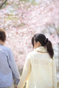 桜の前で手をつなぐカップルの後姿の写真素材 [FYI04545142]