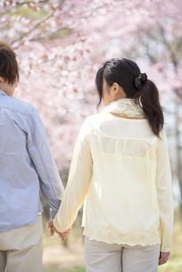 桜の前で手をつなぐカップルの後姿の写真素材 [FYI04545143]
