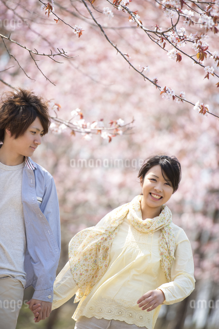 桜の前で手をつなぐカップルの写真素材 [FYI04545146]