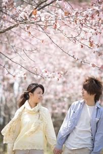 桜の前で手をつなぐカップルの写真素材 [FYI04545147]