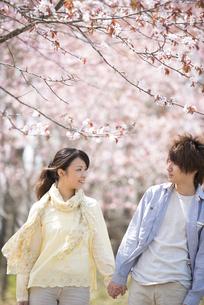 桜の前で手をつなぐカップルの写真素材 [FYI04545148]