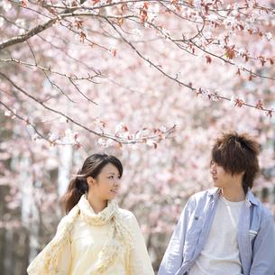 桜の前で見つめ合うカップルの写真素材 [FYI04545149]