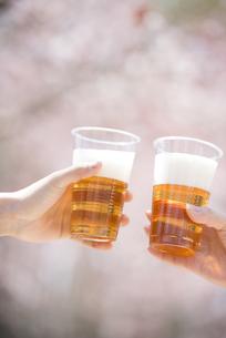 ビールで乾杯をする手元の写真素材 [FYI04545156]