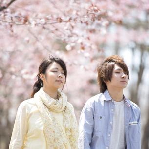 桜の前で深呼吸をするカップルの写真素材 [FYI04545173]