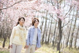桜の前で深呼吸をするカップルの写真素材 [FYI04545176]
