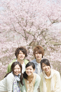 桜の前で微笑む若者たちの写真素材 [FYI04545193]