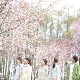 桜を見上げる若者たちの写真素材 [FYI04545214]