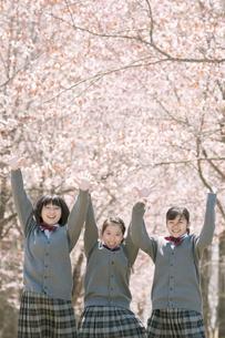 桜の前で手をつなぐ中学生の写真素材 [FYI04545339]