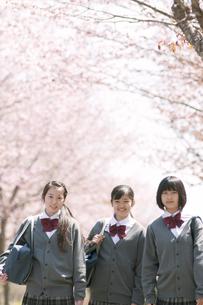 桜の前で微笑む中学生の写真素材 [FYI04545348]