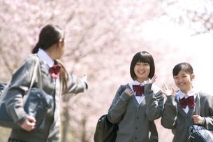桜の前で微笑む中学生の写真素材 [FYI04545353]