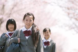 桜の前で微笑む中学生の写真素材 [FYI04545360]