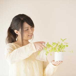 植物に水をやる女性の写真素材 [FYI04545638]