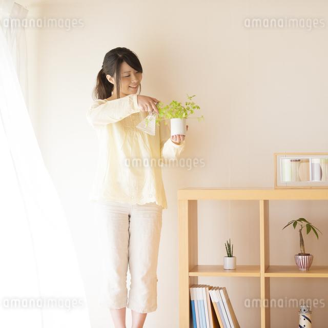 植物に水をやる女性の写真素材 [FYI04545639]