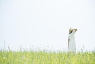 草原に佇む女性の後姿の写真素材 [FYI04548546]