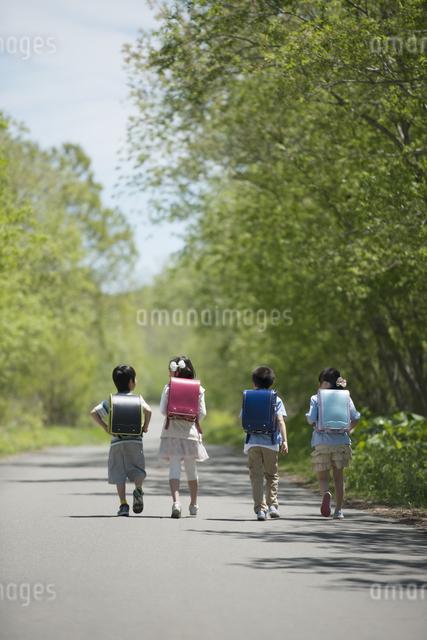 一本道を歩く小学生の後姿の写真素材 [FYI04549044]