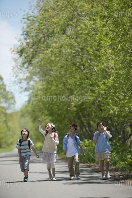 一本道を歩く小学生の写真素材 [FYI04549046]