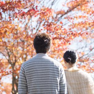 紅葉を眺めるカップルの後姿の写真素材 [FYI04549991]