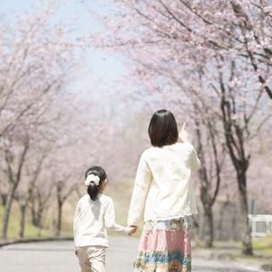 桜並木道を歩く親子の後姿の写真素材 [FYI04551780]