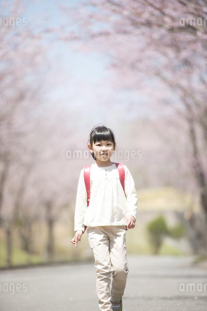 桜並木道を歩く小学生の写真素材 [FYI04551791]