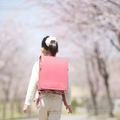 桜並木道を歩く小学生の後姿の写真素材 [FYI04551793]