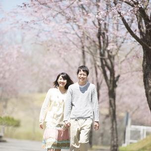 桜の前で手をつなぐカップルの写真素材 [FYI04551811]
