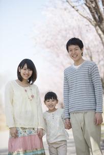 桜の前で手をつなぐ親子の写真素材 [FYI04551848]