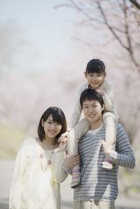 桜の前で肩車をする親子の写真素材 [FYI04551855]