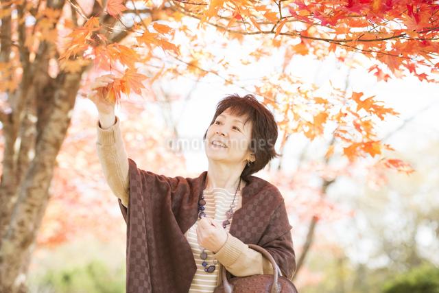 紅葉を眺めるシニア女性の写真素材 [FYI04552832]